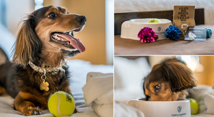 dog on bed with ball next to pampered pet package